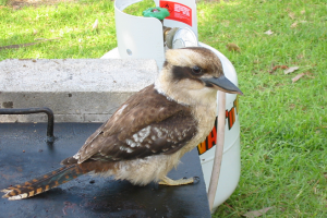 KOOKA ON THE COOKA